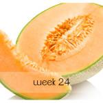 week 24 blog